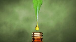 How do we extract CBD oil?